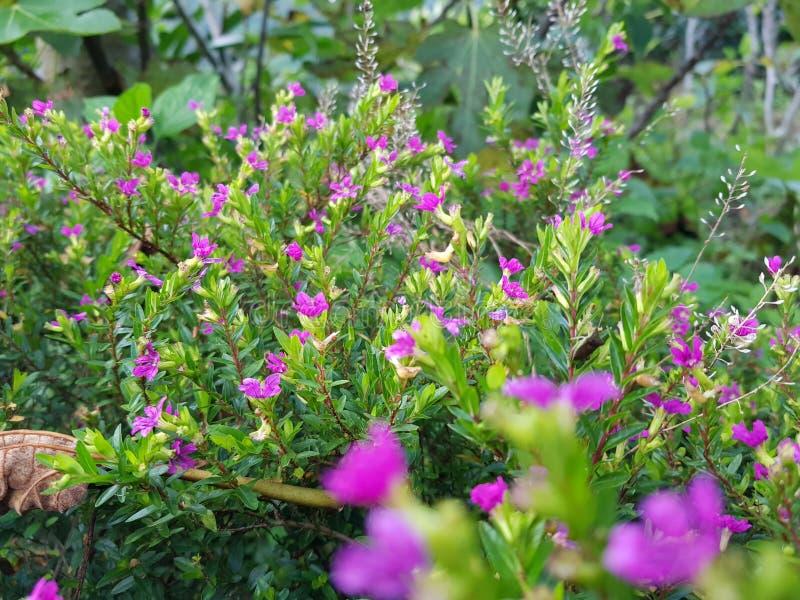 Een hoeveelheid litllebloemen stock afbeeldingen
