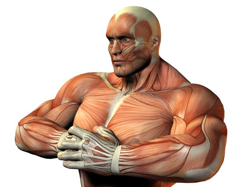Een hogere lichaamsatleten vector illustratie