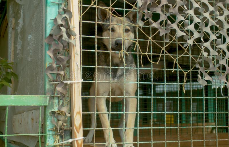 Een hond in de schuilplaats van een hond in vogelhuis royalty-vrije stock afbeeldingen