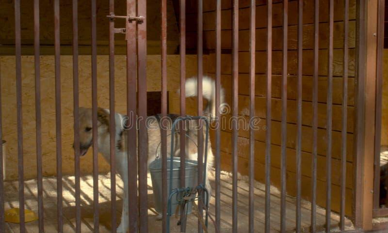 Een hond in de schuilplaats van een hond in vogelhuis stock foto's