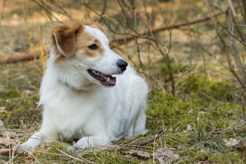 Een hond die buiten spelen stock foto