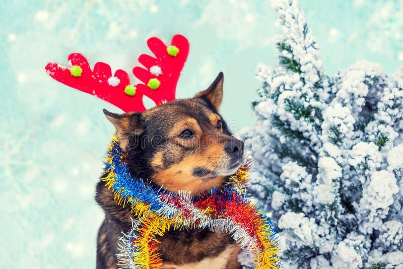 Een hond die hertenhoorn dragen dichtbij Kerstboom royalty-vrije stock foto's