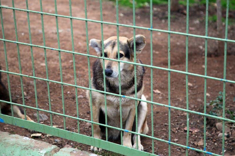 Een hond die op goedkeuring wachten royalty-vrije stock afbeeldingen