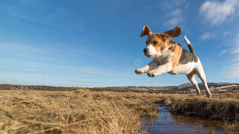 Een hond die over water springen royalty-vrije stock fotografie