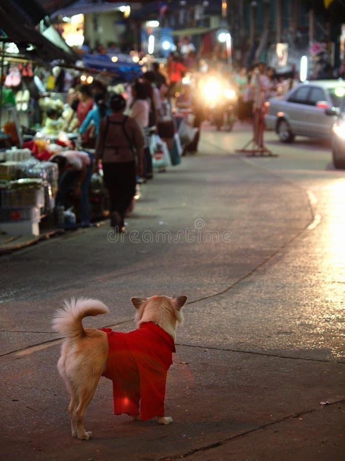 Een hond die rood overhemd wering stock foto