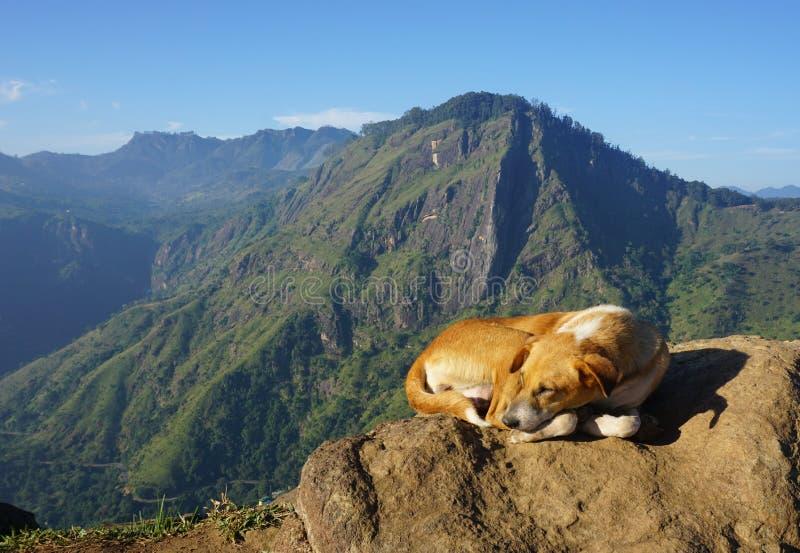 Een hond die van Ella Rock genieten (Sri Lanka) royalty-vrije stock afbeelding