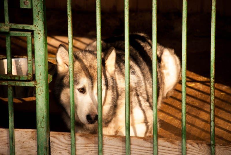 Een hond in een kooi stock fotografie