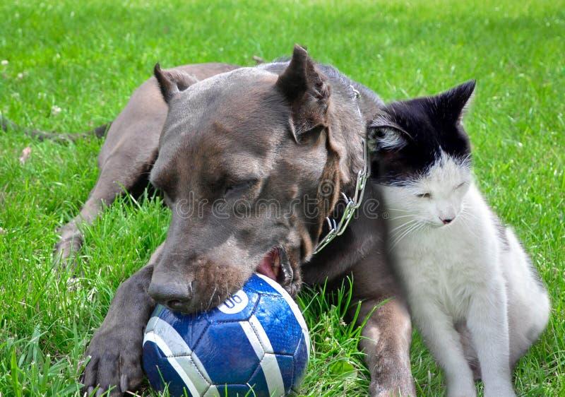 Een hond en een kat spelen een bal stock foto
