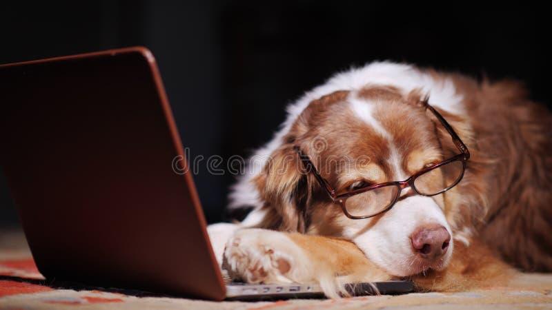 Een hond in glazenslaap dichtbij laptop Overspanning bij het werkconcept royalty-vrije stock afbeeldingen