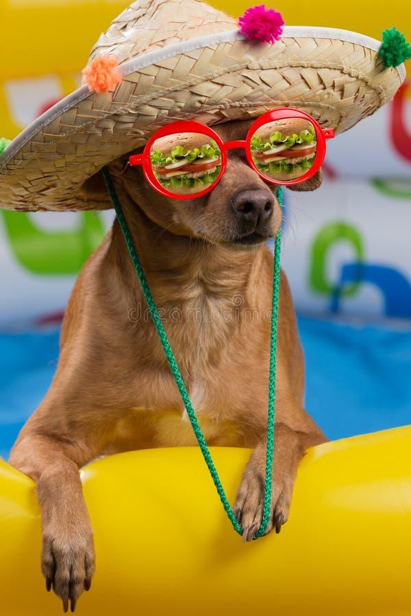 Een hond in een hoed en glazen in een heldere opblaasbare pool, een bezinning in glazen van een grote hamburger, een concept van royalty-vrije stock afbeelding
