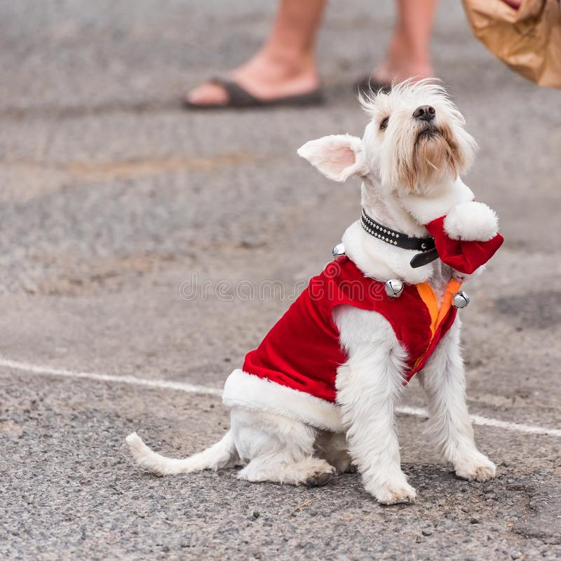 Een hond in een kostuum bij een tentoonstelling van retro auto's Volkswagen, Agde, Frankrijk Exemplaarruimte voor tekst royalty-vrije stock foto's