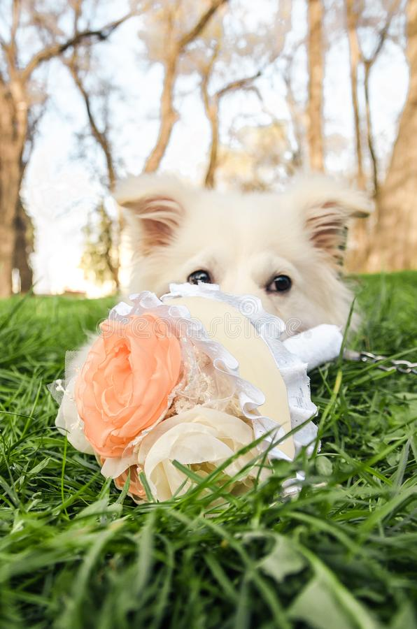Een hond met boeket van bloemen stock foto