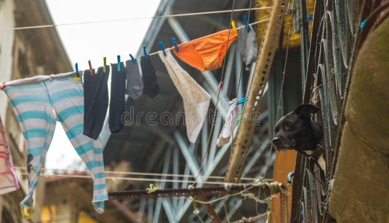 Een Hond op een Balkon naast het Hangen van Wasserij in Porto stock foto's