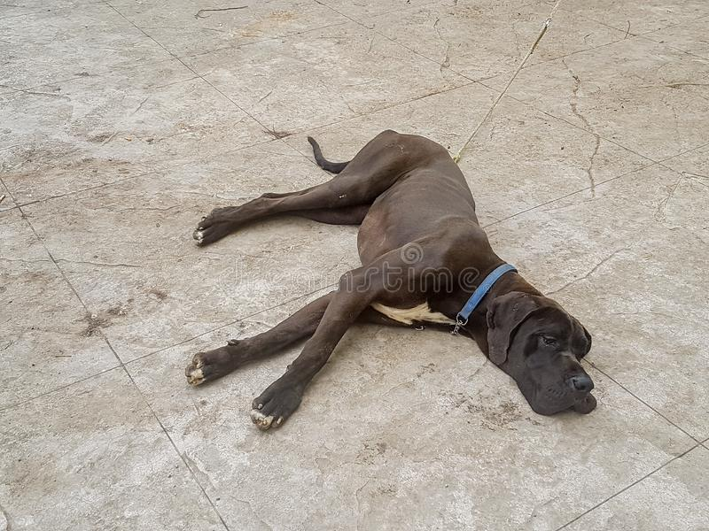 Een hond rust ter plaatse royalty-vrije stock foto's
