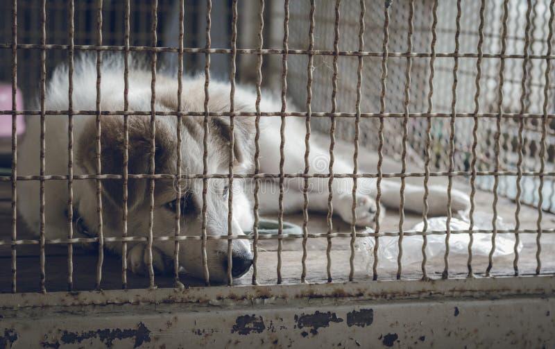 Een hondslaap in een kooi en het voelen eenzaam stock afbeelding