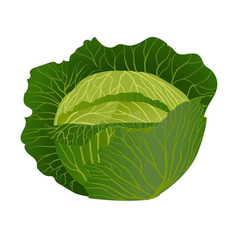 Een hoofd van kool met groene bladeren royalty-vrije illustratie