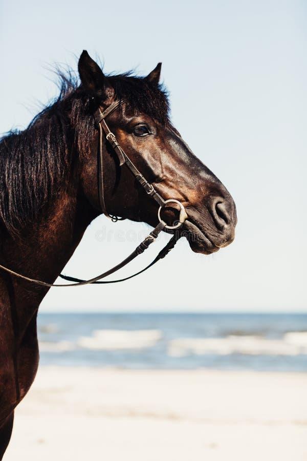 Een hoofd van wild paard op het strand in dichte omhooggaand royalty-vrije stock foto's