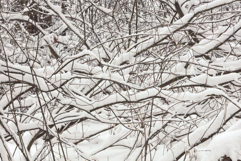 Een horizontale abstracte samenstelling van takken en sneeuw stock foto