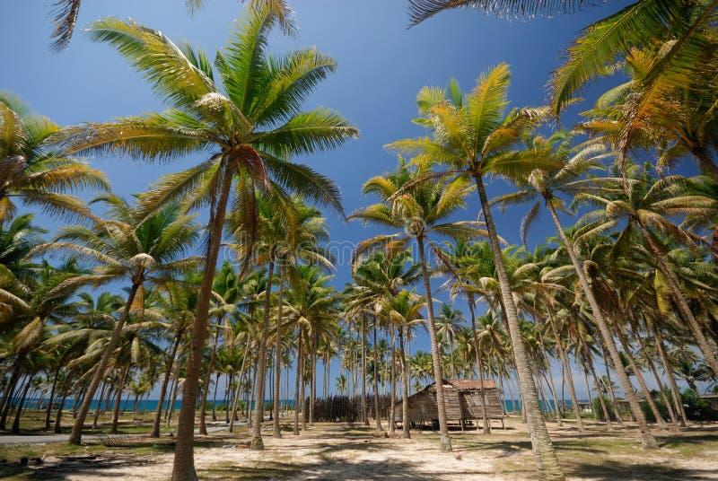 Een houten hut onderaan kokosnotenpalmen. stock afbeelding