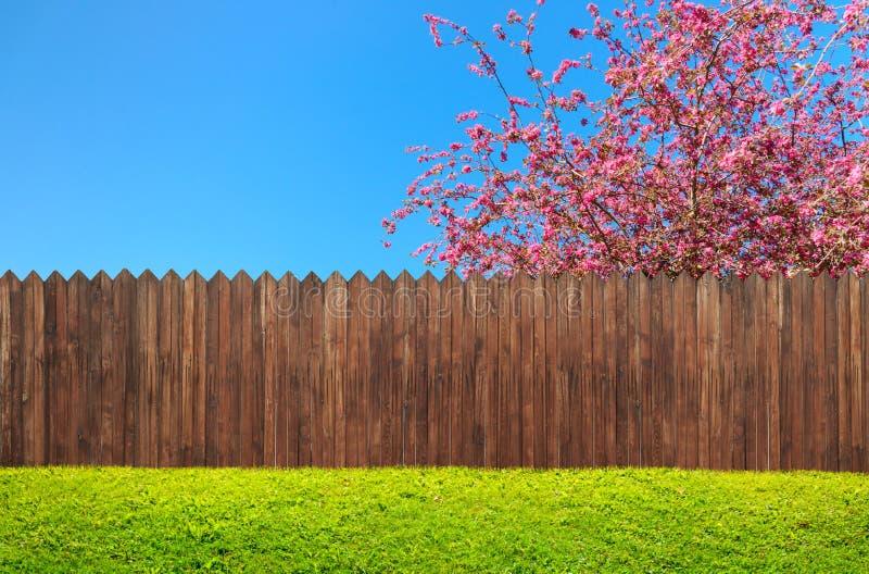 Een houten tuinomheining bij binnenplaats en bloeiboom stock illustratie