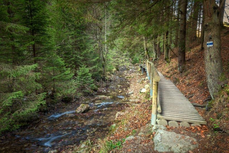 Een houten voetgangersbrug over een stroom in een bos royalty-vrije stock afbeelding