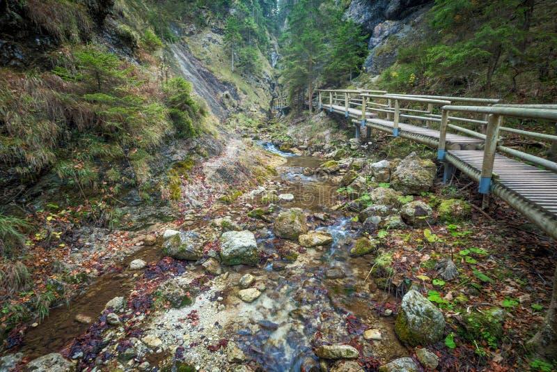 Een houten voetgangersbrug over een stroom in een bos stock afbeelding