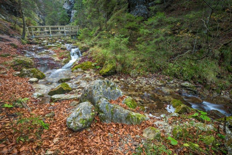 Een houten voetgangersbrug over een stroom in een bos stock foto's
