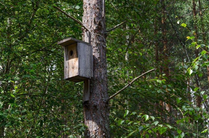 Een houten vogelhuis op een oude hoge pijnboomboom royalty-vrije stock afbeelding