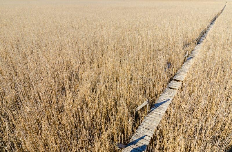 Een houten weg threugh een rietgebied royalty-vrije stock afbeeldingen