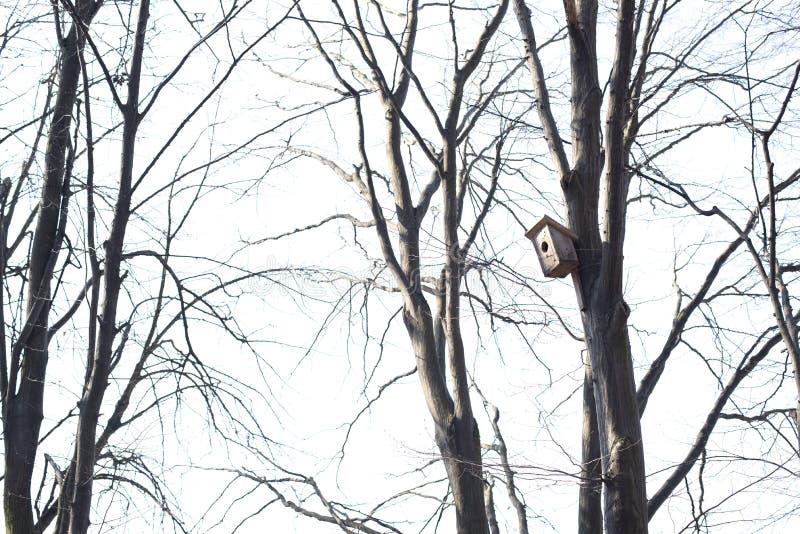 Een huis voor vogels op een boom stock foto's