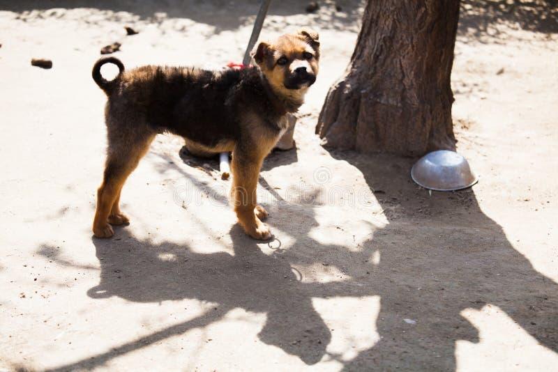 Een huisdierenhond bij wacht royalty-vrije stock foto