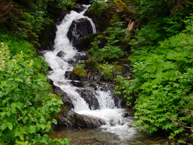 Een ijzige cascade van water in Brits Colombia royalty-vrije stock afbeelding