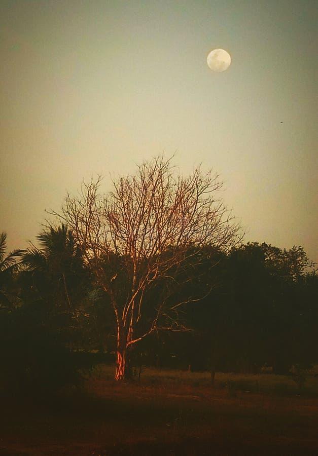 Een illustratief beeld van blad minder boom, maan en hemel in de schemering vector illustratie