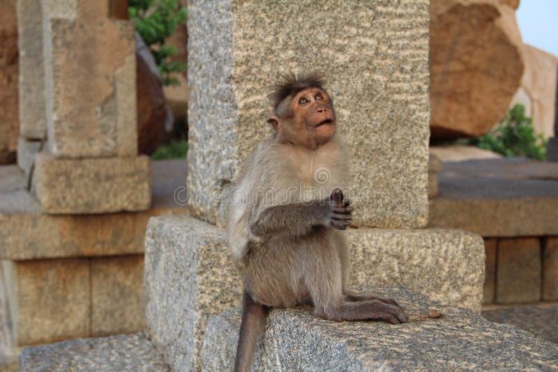 Een Indische macaqueaap onder oude ruïnes van Hampi Grappige macaque De aap mediteert op een steen in Hampi, Karntaka-Staat, Ind. royalty-vrije stock afbeeldingen