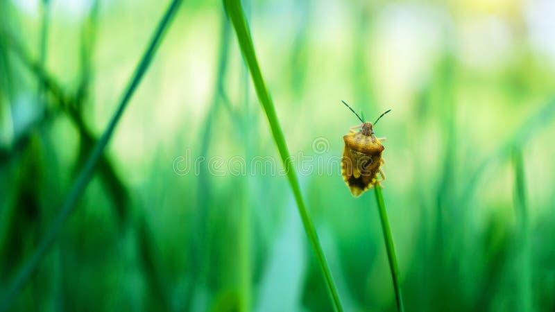 Een insect die zich op het blad bevinden stock foto
