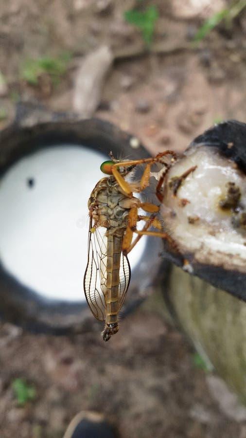 een insect op rubbergebied stock foto's