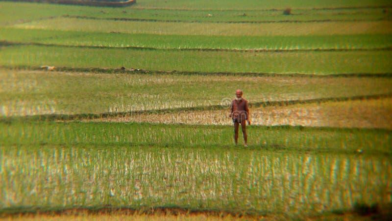 Een Inwoner van Bangladesh landbouwer bevindt zich op medio van zijn gebied royalty-vrije stock afbeelding