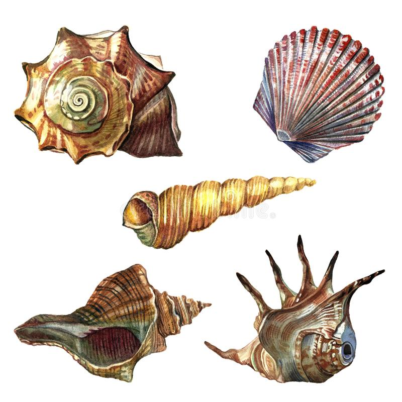 Een inzameling van overzeese die shells met waterverf wordt geschilderd stock illustratie