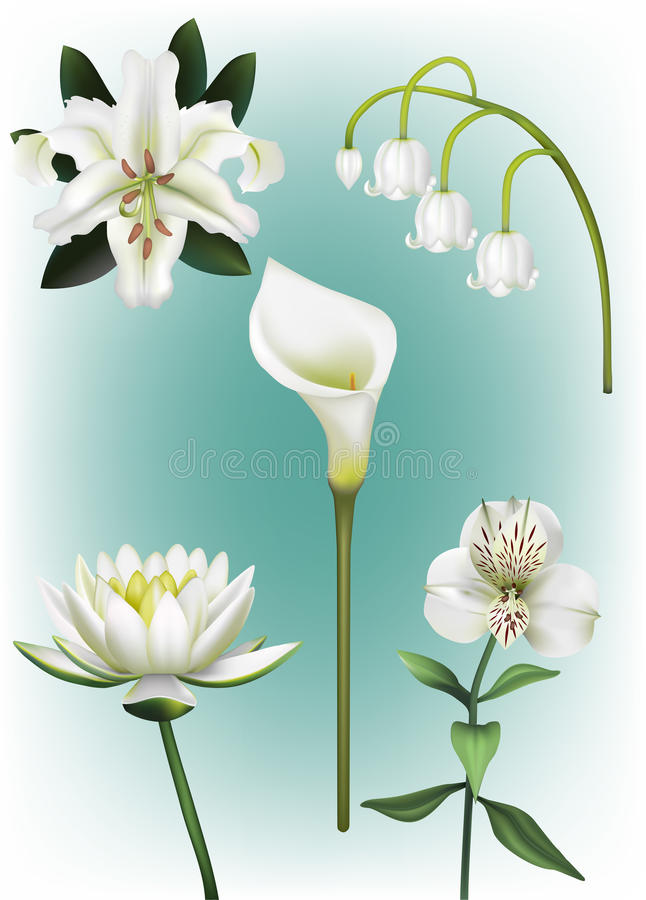 Een Inzameling van Witte Lily Vector Illustrations stock illustratie