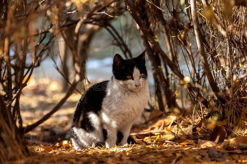 Een jeugd verdwaalde kat royalty-vrije stock afbeelding