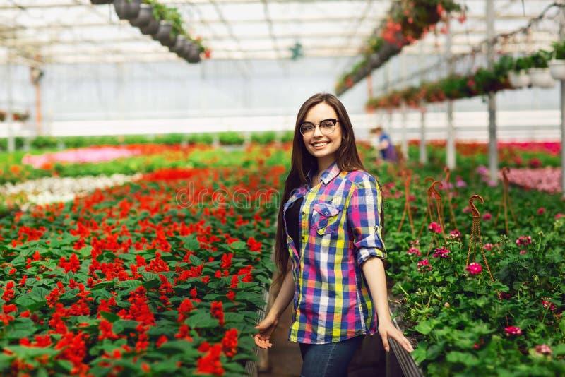 Een jong meisje die glazenzorgen voor Salvia dragen bloeit in een serre stock afbeeldingen