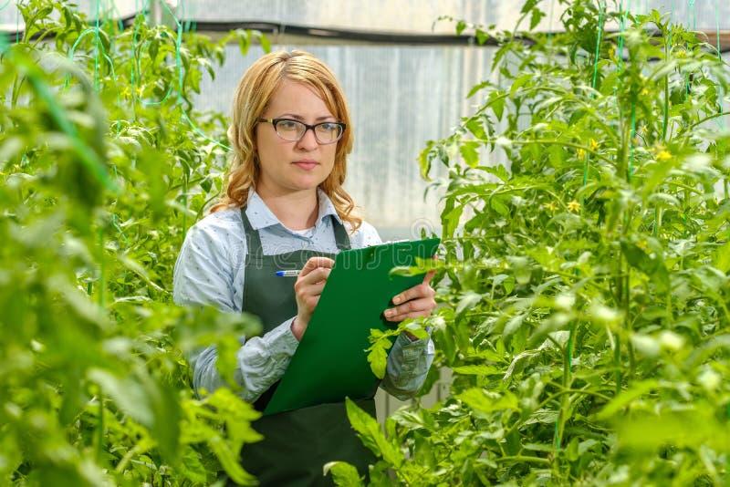 Een jong meisje werkt in een kas Industriële teelt van groenten stock foto