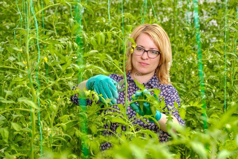 Een jong meisje werkt in een kas Industriële teelt van groenten stock afbeelding