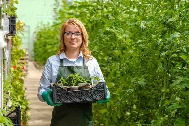 Een jong meisje werkt in een kas Industriële teelt van groenten stock fotografie