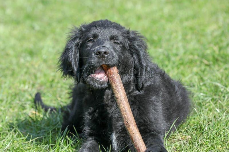 Een jonge hond in een tuin stock foto