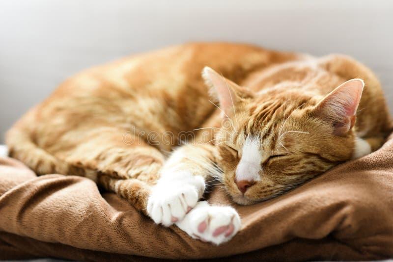 Een jonge kattenslaap op een laag thuis, zoet en mooi royalty-vrije stock foto's