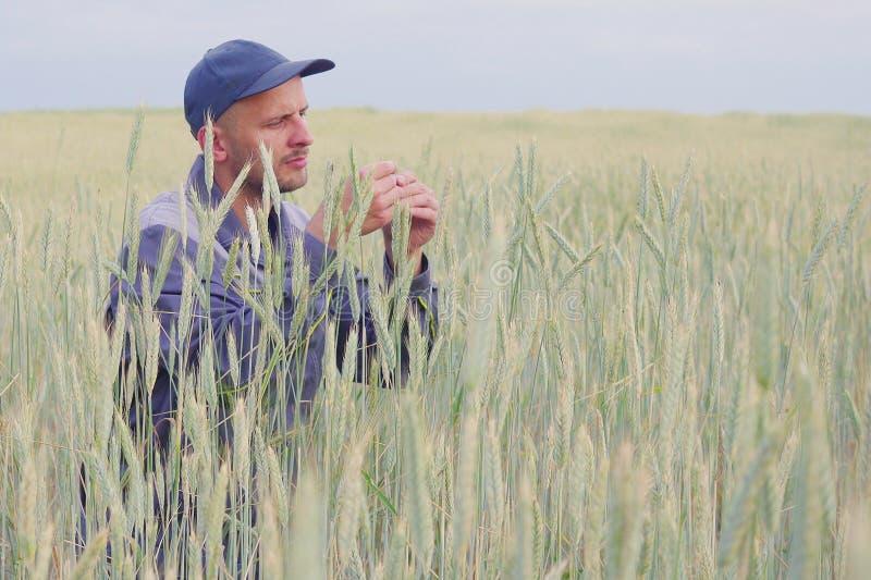 Een jonge landbouwer controleert de installaties op een roggegebied De ruimte van het exemplaar royalty-vrije stock foto