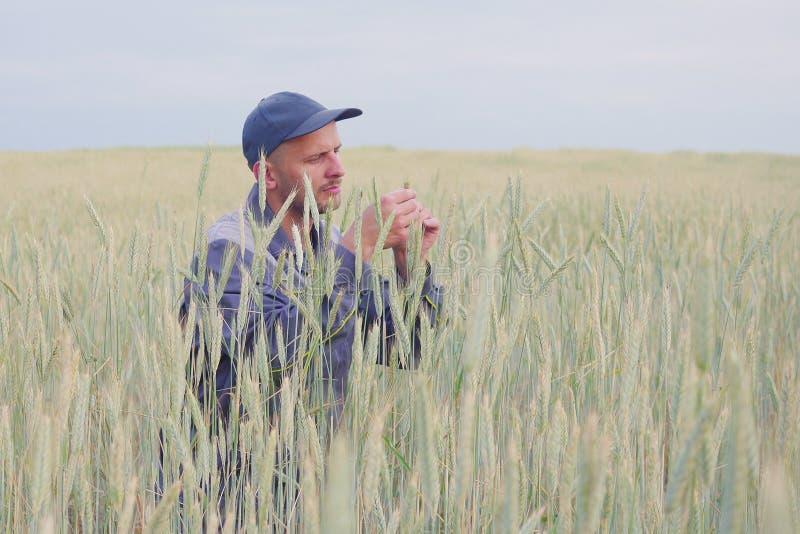 Een jonge landbouwer controleert de installaties op een roggegebied De ruimte van het exemplaar stock foto