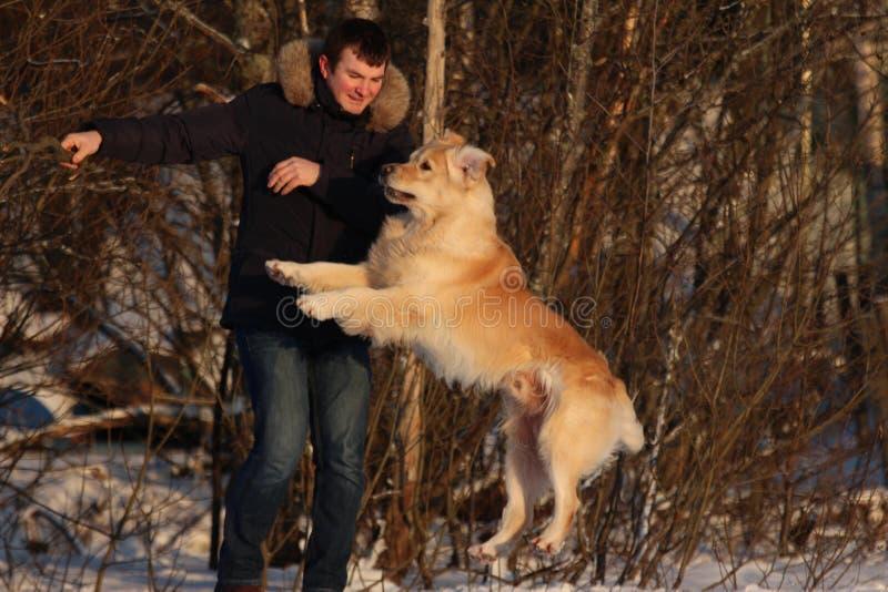 Een jonge mens die zijn hondgolden retriever opleiden royalty-vrije stock foto's