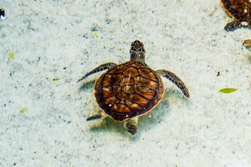 Een Jonge Schildpad stock afbeeldingen